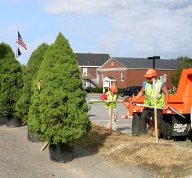City Public Services workers getting ready to plant trees
