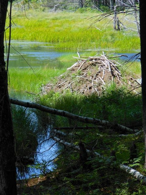 Falmouth Beaver Lodge